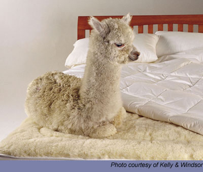 Cria sitting on bed